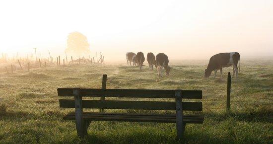 bankje koeien mist